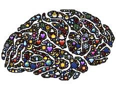 brain-954815__180